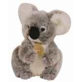 les authentiques koala histoire d ours 2218