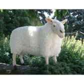 automate mouton anima 0344