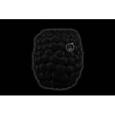 wwf grizzly 15 cm 15 184 004