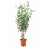 wwf elephant 2 mod ass 25 cm 15 193 008