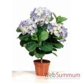 hydrangea 50 cm en pot k louis maes 03520574k