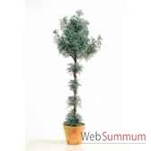 citroenkruid topiary en pot louis maes 03228000
