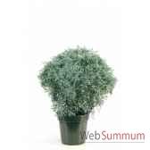 citroenkruid topiary en pot louis maes 03237000