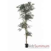 ficus topiary vert louis maes 40104210
