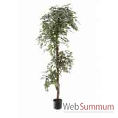 ficus topiary bi color louis maes 40105180