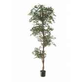ficus topiary bi color louis maes 40105210
