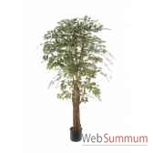 ficus benjamina bi color louis maes 40109150
