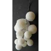 agave x15 en pot 75cm louis maes 40125605