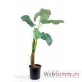caladium geant x 5 feuilles 135cm louis maes 03730000