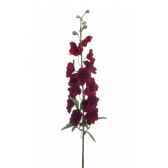 delphinium 93cm louis maes 06029649