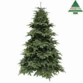 arbre dnoedelux abies nordmannh185d135 vert f tips 1857 nf 390514