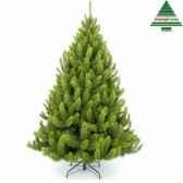 arbre dnoerichmond pine h185d117vert tips 545 790626