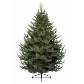 sapin grove mountain 180 cm everlands nf 680051