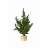 sapin conifere de table 20 cm everlands nf 685090