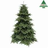 x mas tree delux abies nordmann h260d175 dgreen tips 4406 edelman 389519