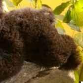 ours brun bebe hermann spielwaren 20116 6