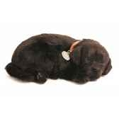 labrador noir perfect petzzz 65410