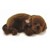 labrador chocolat perfect petzzz 65411