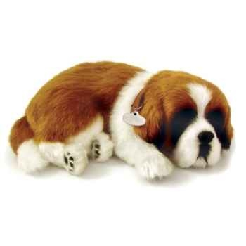Saint bernard Perfect Petzzz -65419