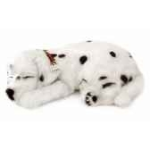 dalmatien perfect petzzz 65422