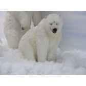 peluche ours polaire assis 92cmhx155cmanima 4191