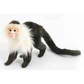 singe capucin anima 5851