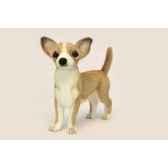 chien chihuahua anima 6295