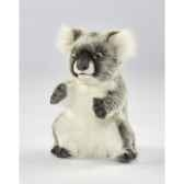koala anima 6298