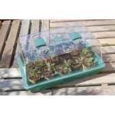 rapid grow mini serre pour semis intermas 160018