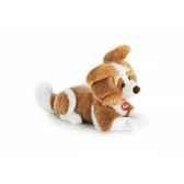 chien ben trudi 22662