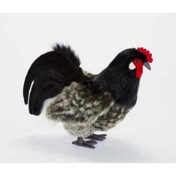 Poule noire 34cml Anima -6037