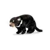 peluche diable de tasmanie anima 4383