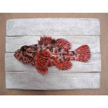 Cadre poisson de mer Cap Vert Chapon -CADR01