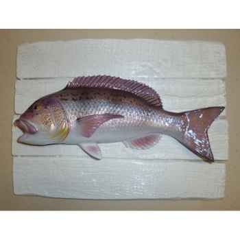 Cadre poisson de mer Cap Vert Denti -CADR02