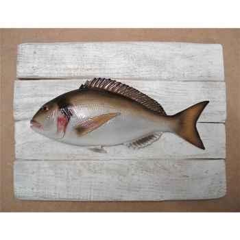 Cadre poisson de mer Cap Vert Dorade royale -CADR03