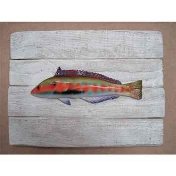 Cadre poisson de mer Cap Vert Girelle royale -CADR04