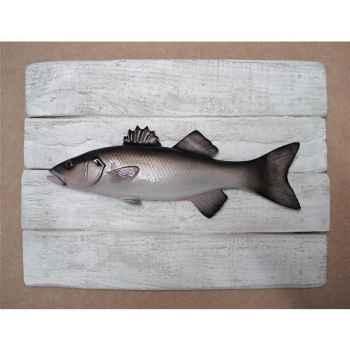 Cadre poisson de mer Cap Vert Loup -CADR06
