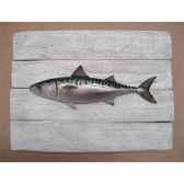 cadre poisson de mer cap vert maquereau cadr07