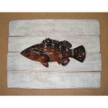 Cadre poisson de mer Cap Vert Mérou -CADR08