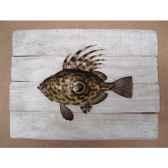 cadre poisson de mer cap vert saint pierre cadr09