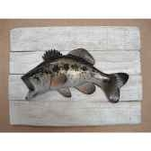 cadre poisson d eau douce cap vert black bass cadr11