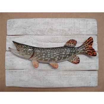 Cadre poisson d\'eau douce Cap Vert Brochet -CADR12