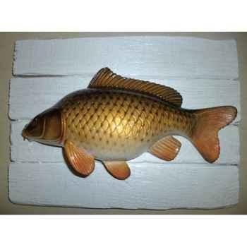 Cadre poisson d\'eau douce Cap Vert Carpe commune -CADR13