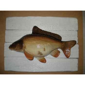 Cadre poisson d\'eau douce Cap Vert Carpe miroir -CADR14