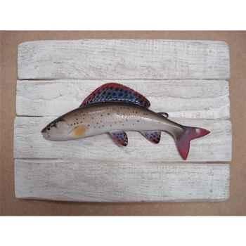 Cadre poisson d\'eau douce Cap Vert Ombre commun -CADR16