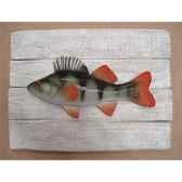 cadre poisson d eau douce cap vert perche cadr17
