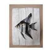 cadre poisson d eau douce cap vert scalaire cadr20