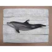 cadre mammifere marin cap vert dauphin cadr24