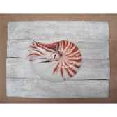 cadre mammifere marin cap vert nautile cadr28