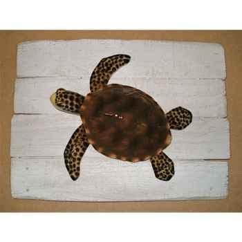 Cadre mammifère marin Cap Vert Tortue -CADR30